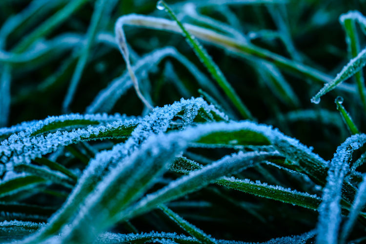 Plant Cold Temperature Winter Close-up Selective Focus Frozen Ice Frost Snow No People Beauty In Nature Nature Green Color Growth Day Backgrounds Full Frame Leaf Plant Part Outdoors Blade Of Grass