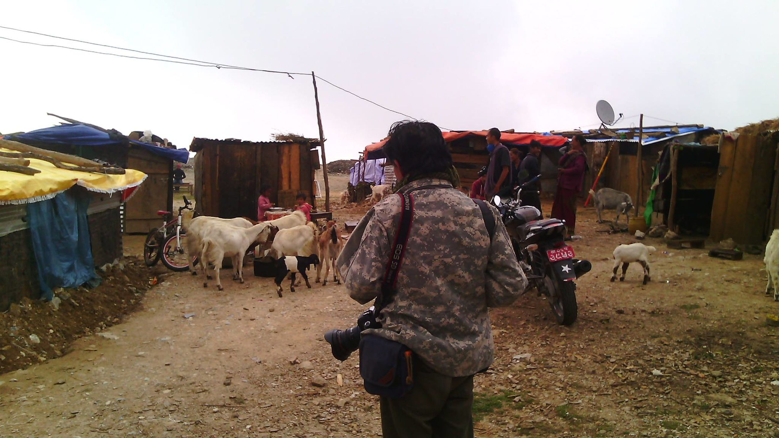 domestic animals, pets, domestic, mammal, livestock, real people, sky, nature, vertebrate, day, group of animals, walking, men, people, cattle, domestic cattle, rear view, clothing, outdoors, herbivorous