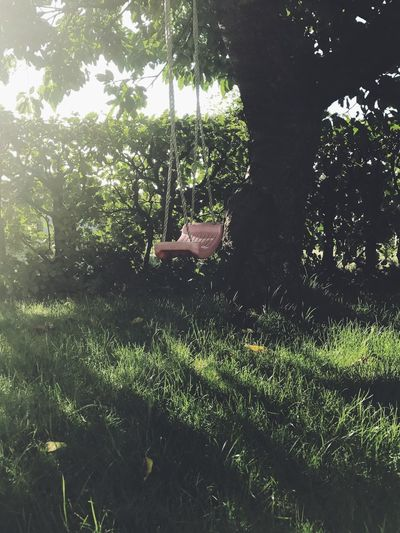 Swing Growth Tree In The Garden Garden Outdoor Toy Red Swing Morning Light Branch Nature No People Hanging Backlight Backlit Backlight And Shadows Faded Beauty Copy Space Copyspace Nature Forest Day Outdoors Grass