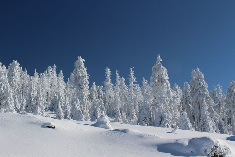 winter impressions of Nationalpark Harz Cold Temperature Snow Winter Nature Harz Brocken Trees Barks Of A Tree Sky Beauty In Nature Tranquil Scene Clear Sky White Color Tranquility Scenics - Nature Blue Copy Space No People Environment Covering Tree Landscape Plant Snowcapped Mountain