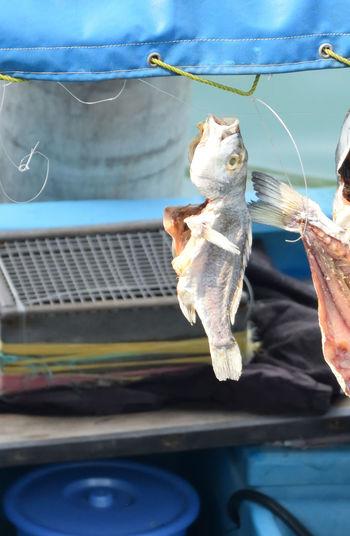 Dry fish like a