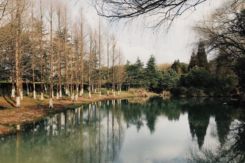 Outdoors Water Reflection Tree Lake Plant Beauty In Nature Tranquility Nature Waterfront Tranquil Scene