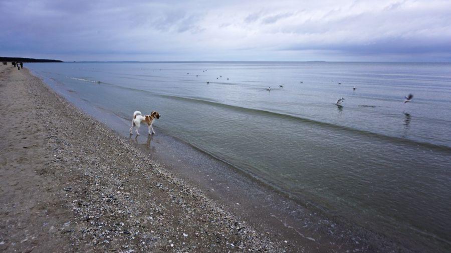 Happy New Year 🍀 Happynewyear Sea Water Beach Animal Themes Mammal Animal Domestic Domestic Animals Land Sky Dog Pets One Animal Canine Beauty In Nature Nature Horizon Over Water Scenics - Nature Vertebrate