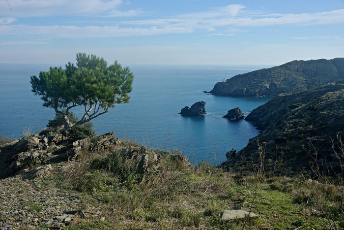 bay of Cadaques sea landscape view on Cala Nantes Cadaqués, Spain Cala Nantes Catalonia Costa Brava Day Nature Nature Landscape No People Outdoors Rock - Object Sea Travel Destinations Tree Travel Pictures
