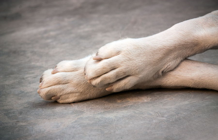 Shepherd Asian  Alabai Human Body Part One Animal Mammal Relaxation Animal Animal Themes Paw Domestic Animals Domestic Pets Human Hand Close-up Animal Body Part Animal Leg Hand Dog Canine Body Part Indoors  One Person Human Foot Finger