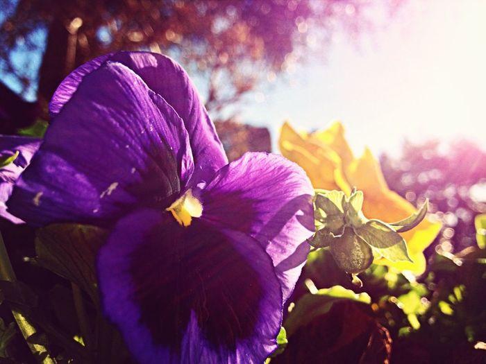 #flower#spring
