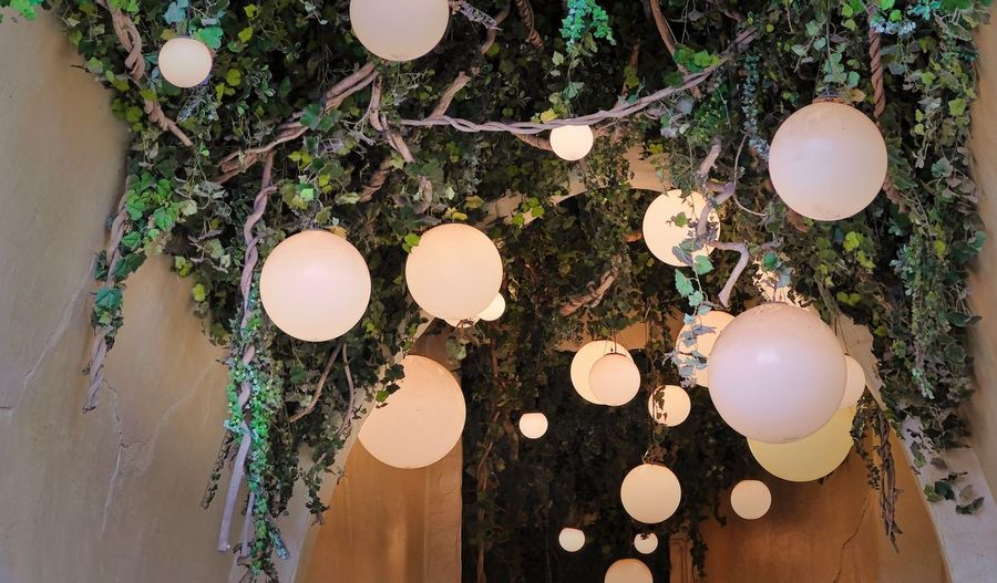 Attraction theme park the Efteling, Kaatsheuvel, the Netherlands. Egg No People Hanging Decoration Lighting Equipment Illuminated Nature Wood - Material Close-up Indoors  Celebration High Angle View Food And Drink Tree White Color Food Plant Glowing Light Electric Lamp