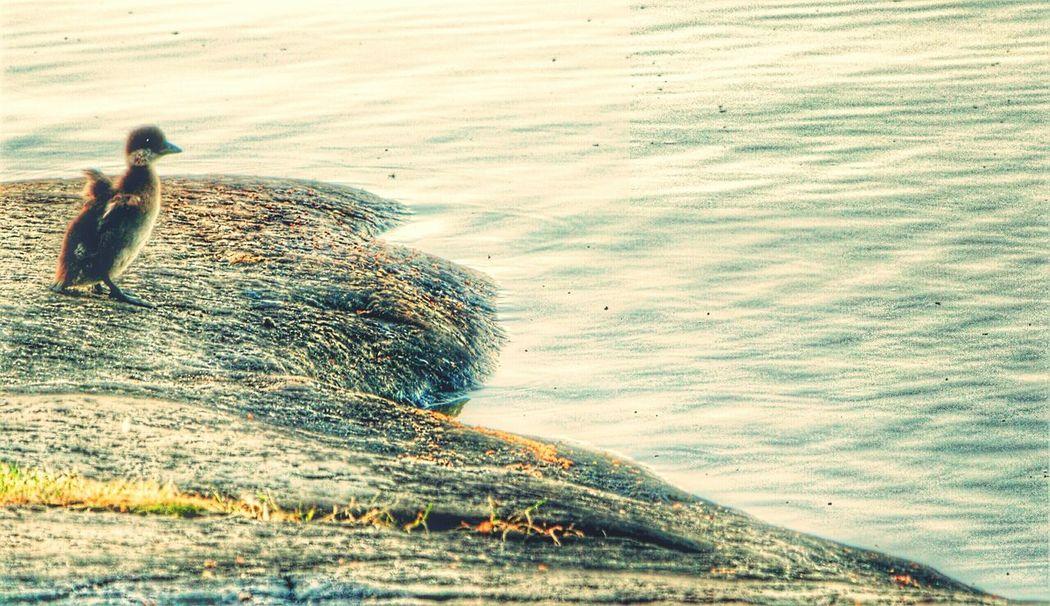 Wildlife Nature Beauty In Nature Bird Close-up Think Positive Littoisten Järvi