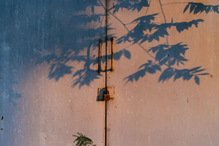 Old rusty padlock on the door Shadow Nature Tree No People Plant Wall - Building Feature Day Sunlight Outdoors Metal Sky Built Structure Branch Architecture Technology Plant Part Leaf Growth Window Beauty In Nature Focus On Shadow Old Rusty Padlock Lock Door Sunlight Protection