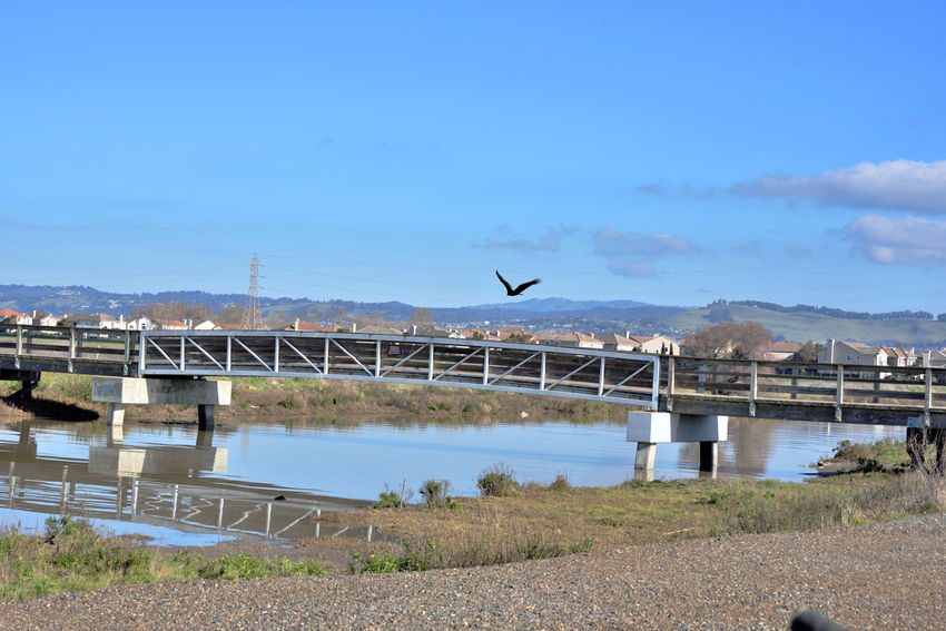 Flight Over Bay Trail 4 California Condor Gymnogyps Californianus New World Vulture Birds🐦⛅ Birdwatching Birds_collection Birds Of Prey Scavenger Birds In Flight Avian Eastbay Hills San Francisco Bay Trail Bridge San Lorenzo Creek Eastbay Hills Reflections Reflected Glory Reflections In The Water Marsh Nature Beauty In Nature Nature_collection Tidal Wetlands Houses
