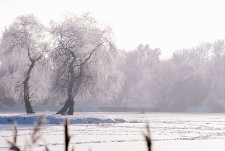 Minsk, Loshica Park Frozen Snow ❄ Winter Beauty In Nature Cold Cold Temperature Day Landscape Nature Outdoors Snow