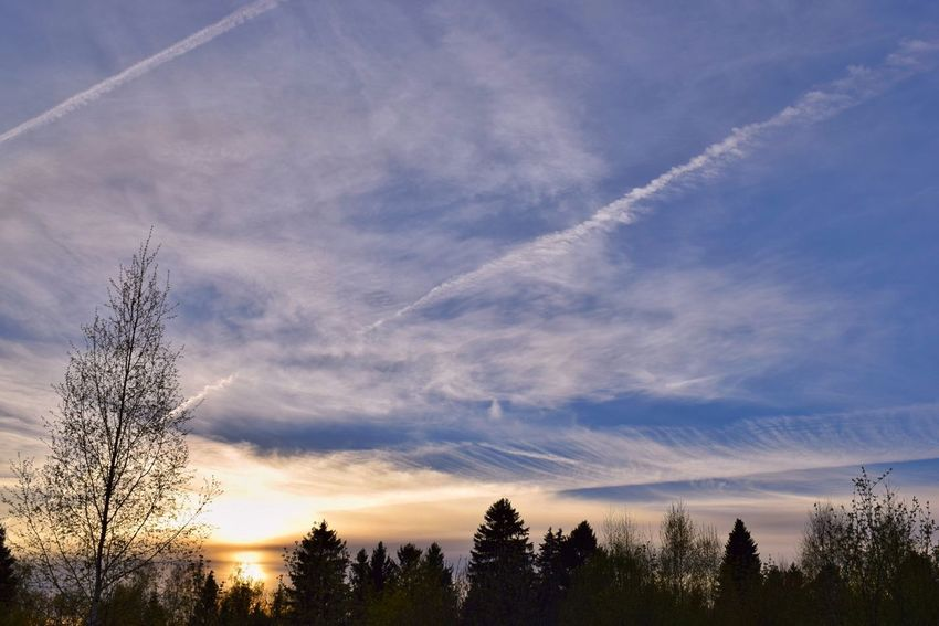 Good morning 👋☺️ Sky series 🌬☁️☀️ Tree Sky Nature Beauty In Nature Scenics Tranquil Scene No People Silhouette Sunset Tranquility Cloud - Sky Low Angle View Vapor Trail Landscape Bare Tree Outdoors Contrail Day Clouds And Sky Nature_collection Beauty In Nature Nature
