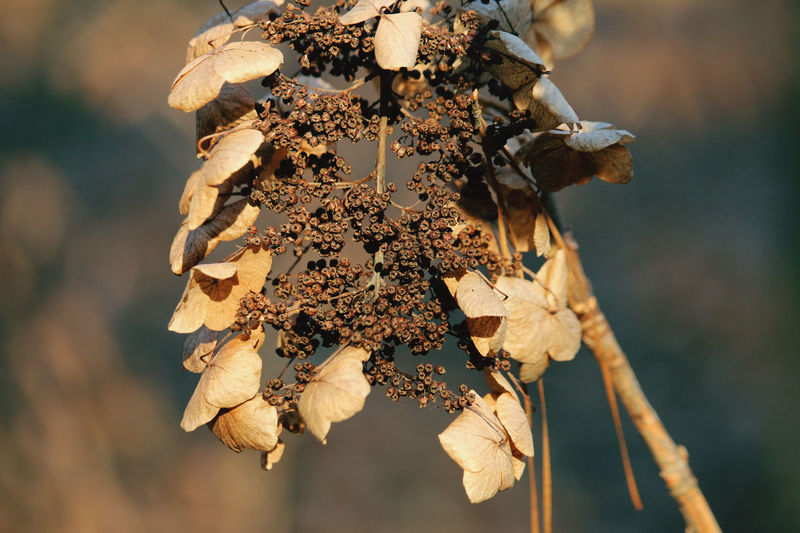 Close-up of dry leaves on plant during autumn