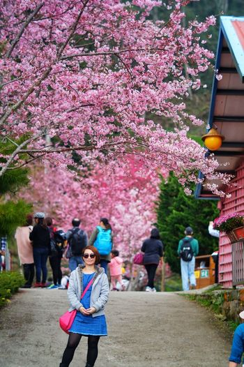 Tree Flower Women Full Length Multi Colored Pink Color Men Cherry Blossom Outdoors People Day Adult Real People Nature Beauty In Nature Adults Only 恩愛農場 臺灣 Nature Taiwan