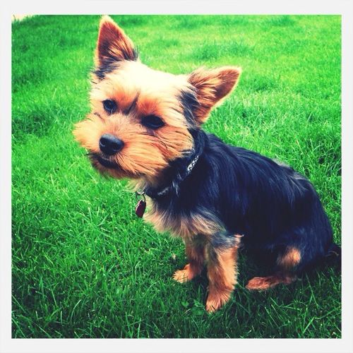 tilly Dog Petstagram Cute Pets Outsidee