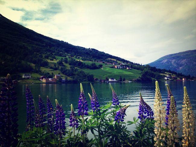 Beautiful Nature Fiordos Norway Great Atmosphere Taking Photos