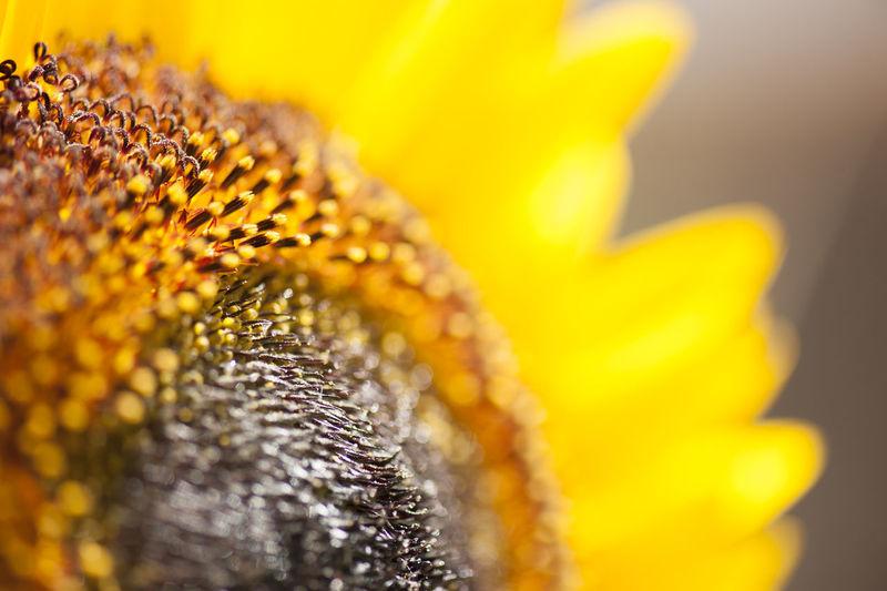 Macro shot of yellow flowering plant