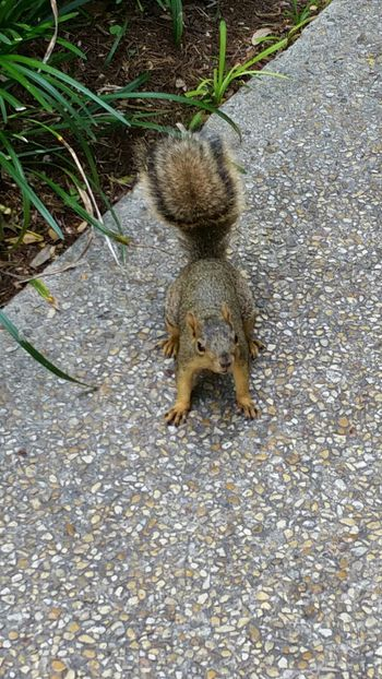 Squirrel Attacking Position Cute♡ Squirrel Closeup Squirrel Photo Nature Outdoors Alamo Square Beauty In Nature No People EyeEmNewHere