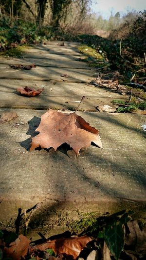 Taking Photos Perspective Nature On Your Doorstep Beauty In Nature Nature Photography Focus On Foreground Nature EeYem Best Shots Shadows Tranquil Scene Tranquility Leaves Leaves On The Ground Leaves Shadow Wooden Wooden Structure Wooden Bridge WoodLand Wooden Walkways Beauty Of Decay Beautiful Nature Beauty In Ordinary Things Beautyofdecay Nature The Greatest Artist Fallen Leaves