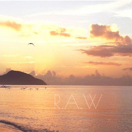 Taking Photos Nature On Your Doorstep EyeEm Nature Lover Pelicans Portstephens EyeEm Best Shots - Sunsets + Sunrise Sunrise Valentinesday 2015❤✔