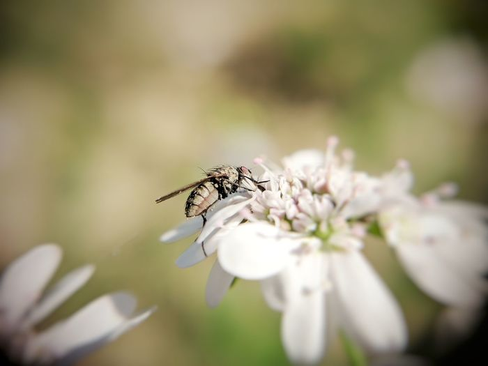 EyeEm Selects Perching Flower Full Length Insect Bright Macro Feeding  Close-up Animal Themes Plant Magnification Wildflower Fly Blossom Plant Life In Bloom Housefly Arthropod Animal Behavior