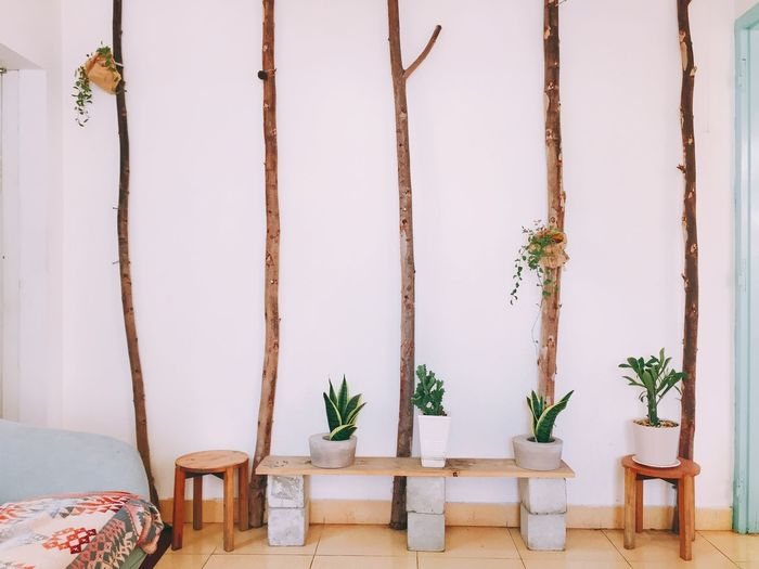 Potted plants on tables against wall