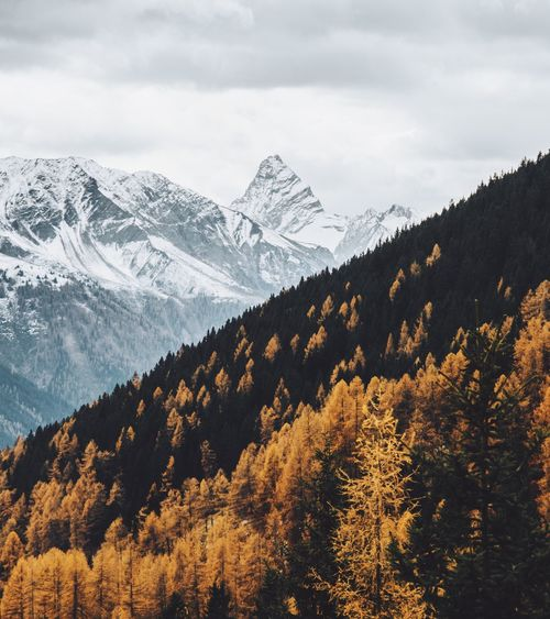 Autumn vibes Mountain Snow Nature Mountain Range Sky Landscape Cloud - Sky Snowcapped Mountain Tree Beauty In Nature Mountain Peak Outdoors Scenics No People Tranquil Scene Tranquility Day Cold Temperature
