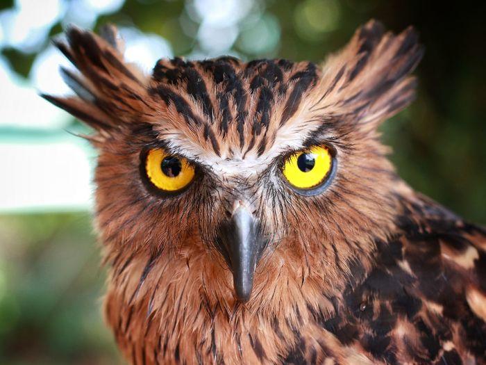 The eyes Bird