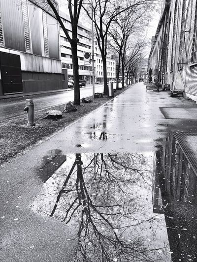Mirror On The