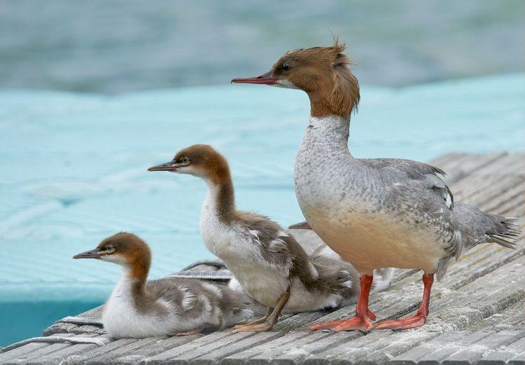 Close-up of birds on sea shore