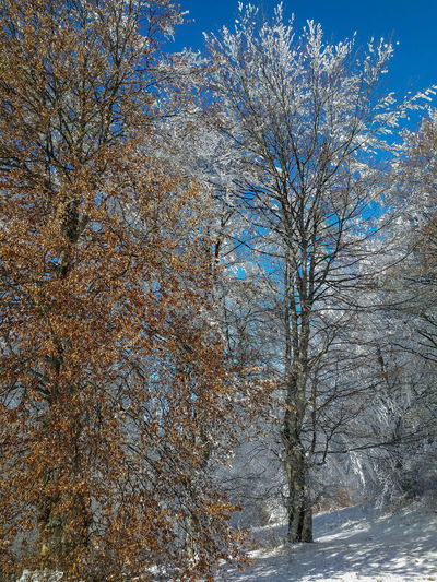 View of bare trees on snow covered land