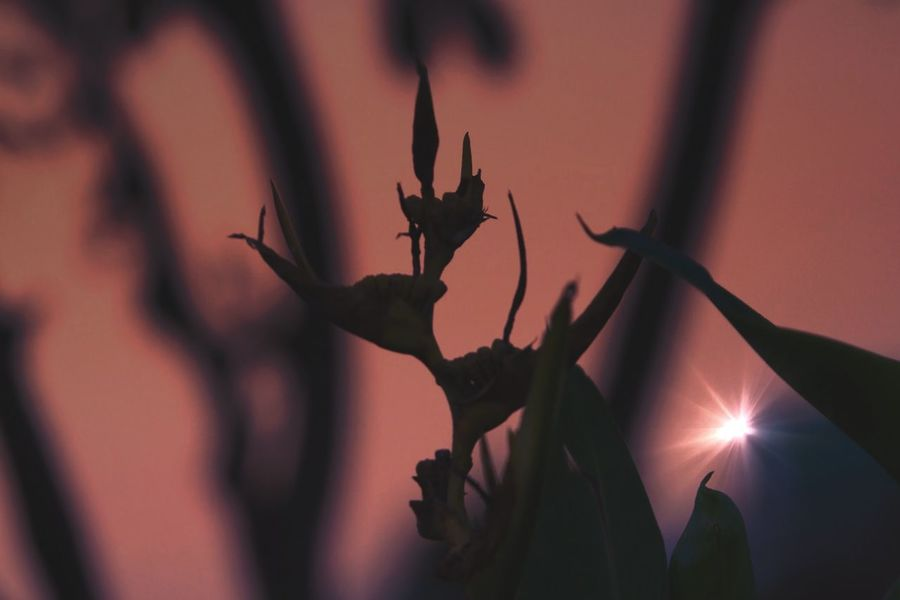 Flower Flower Head Withered Flower Sunset Light Before Dark Mix Yourself A Good Time EyeEmNewHere The Week On EyeEm Nature Light And Shadow Silhouette Colors Taking Photos Travel Destinations EyeEm Best Shots EyeEm Best Edits Getting Inspired Thank You My Friends 😊