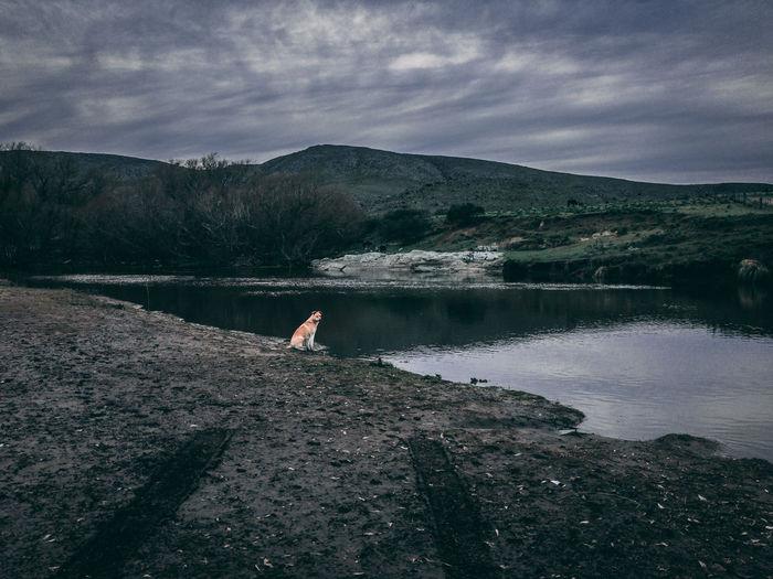 Dog sitting by lake