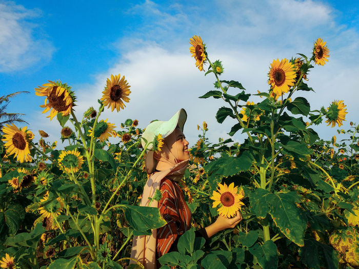 Low angle view of sunflower on field against sky