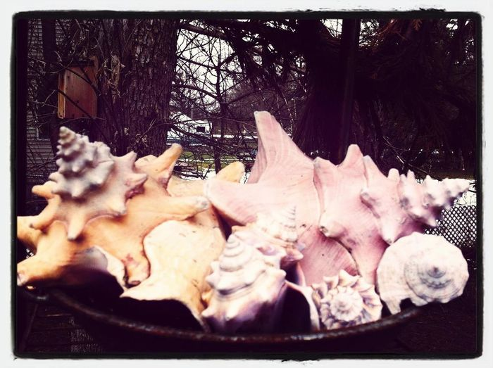 Bowl Full Of Shell-y's