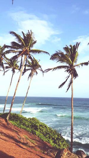 في مهب الرياح Mirissabeach Srilanka Photography SriLanka Travel Tree Water Palm Tree Sea Wave Beach Sand Horizon Over Water