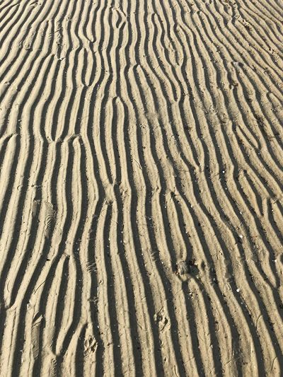 Ripples in the sand. St Kilda Beach. Victoria. Australia Sand Pattern Full Frame Land Backgrounds Natural Pattern Wave Pattern High Angle View No People Nature Beach Day Tranquility Sand Dune Beauty In Nature Scenics - Nature Outdoors Landscape Desert Climate Arid Climate Beauty In Nature Texture
