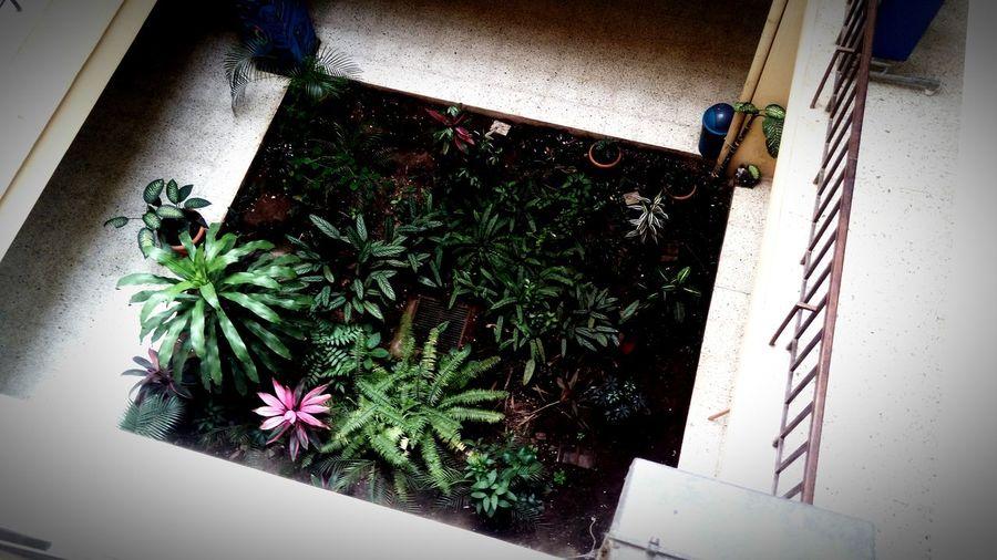 Plants in corridor