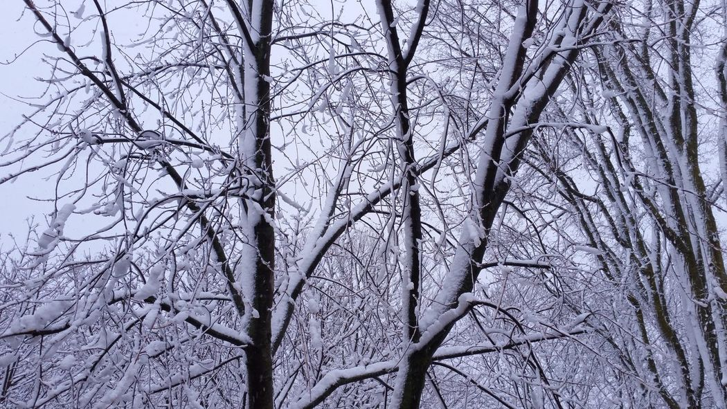 This is it ! Welcome Winter but don't stay too long... Tree Nature Branch Low Angle View No People Bare Tree Growth Outdoors Sky Day Beauty In Nature Close-up Snow Snowstorm Trees Winter Winterland Winter Wonderland EyeEm Nature Lover First Snow