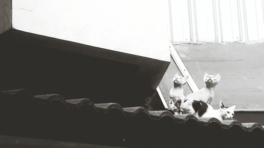 Cats Rooftops Capa Filter EyeEmBestPics