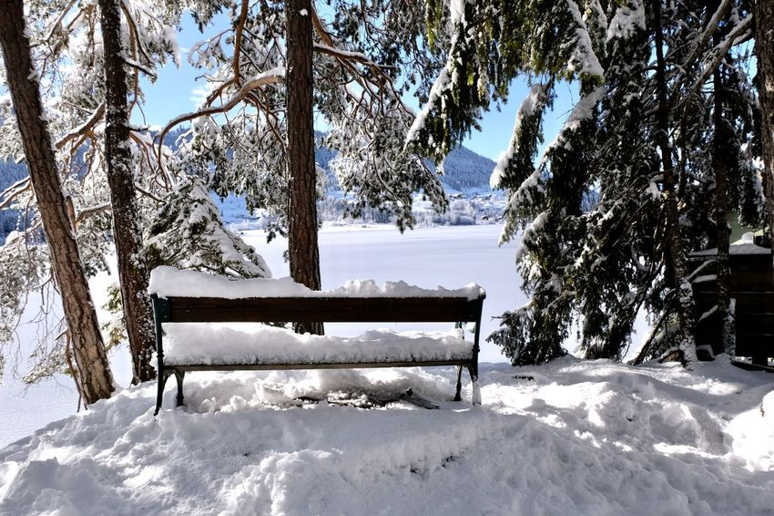 Snow Covered Branch Branch Bench Austria Frozen Lake Winter Landscape Beauty In Nature Cold Cold Temperature Mountain Range Nature No People Outdoors Peaceful Peaceful Place Snow Snow Covered Snow Covered Landscape Tranquil Scene Tranquility Weißensee Winter Winter Wonderland Shades Of Winter