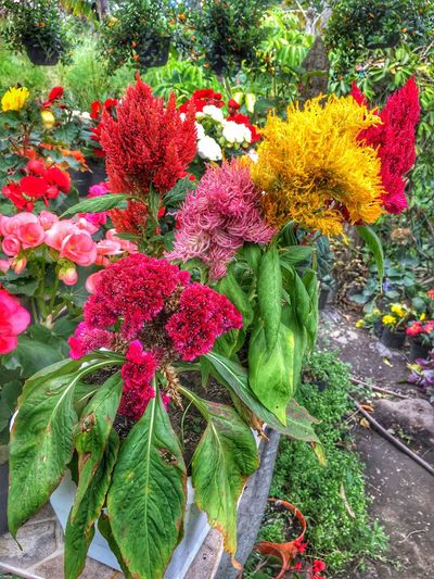 Flower Nature Beauty In Nature Plant Outdoors Growth Fragility No People Freshness Flower Head Day Close-up