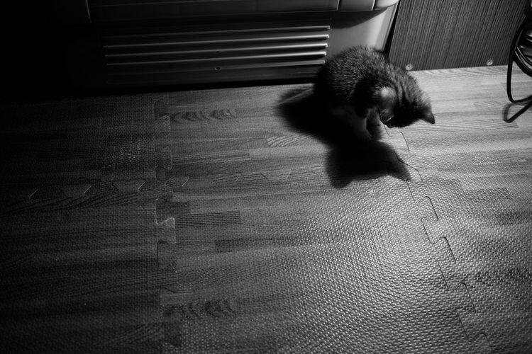 Cat Black &