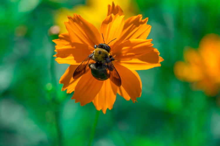 Hello Mr. Bee! Check This Out Hanging Out Taking Photos Flowers Flower Collection Flowerporn Flower Photography Flowers_collection Bee Bee 🐝 Insect Photography Nature Nature_collection Nikonphotography Nikon Eyeemphotography EyeEm Best Shots Beauty In Nature Nature On Your Doorstep Raleigh