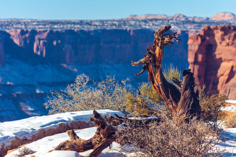Beauty In Nature Day Dead Horse Point State Park Landscape Mountain Nature No People Non-urban Scene Outdoors Physical Geography Rock Formation Scenics Snow State Park  Travel Destinations Tree Tree Trunk Utah Winter