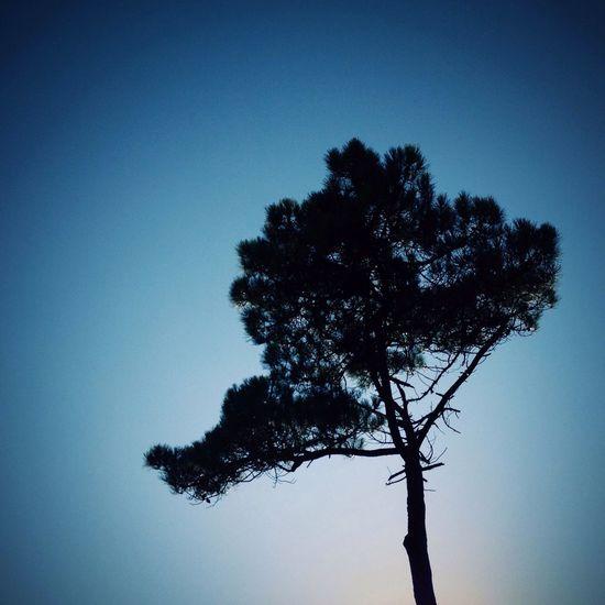 """Alone with Tree"" Bluesky TreePorn Tree And Sky Minimalobsession Naturelovers Skyporn"