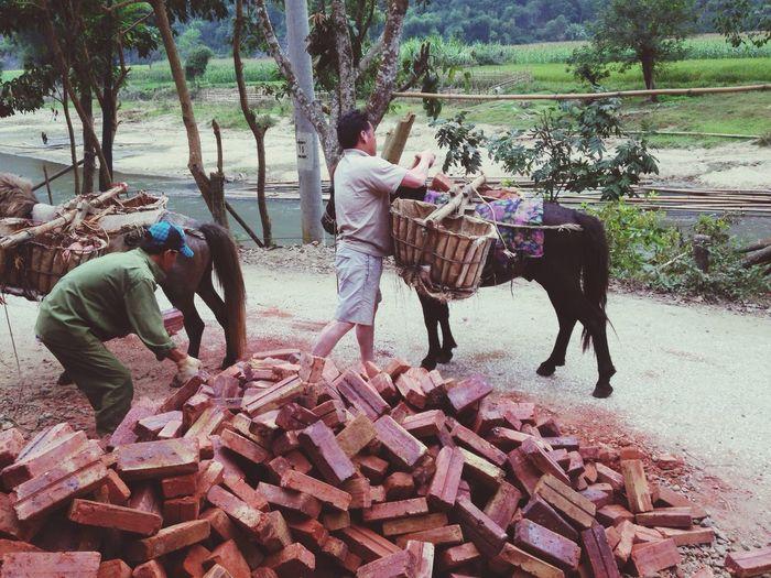 Hello World Horse Vietnam Hồ Ba Bể Phuot Hardwork