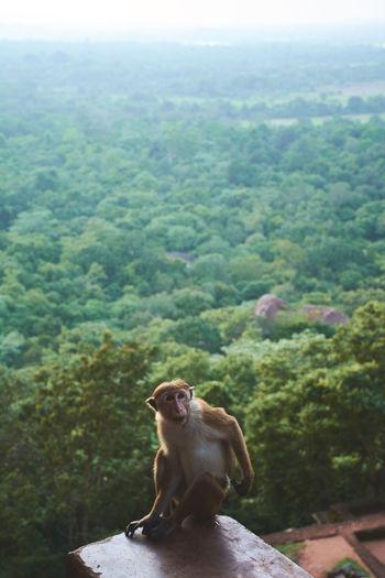 Monkey on landscape against sky