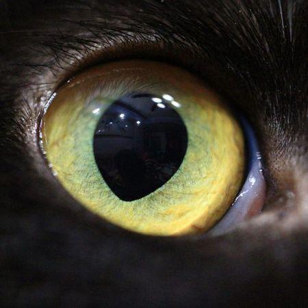 🐱銳利之眼👀🐈 雪亮 銳利 瞳孔 眼神 貓眼 眼球 視網膜 微距 凝神 凝視 望著 看 水晶 神韻 VSCO EXIF 相機:Canon 型號:EOS 60D 鏡頭:Canon EF100mm f2.8L Macro IS USM 焦距:100mm 光圈:f/2.8 快門:1/125s ISO:6400 閃光:無