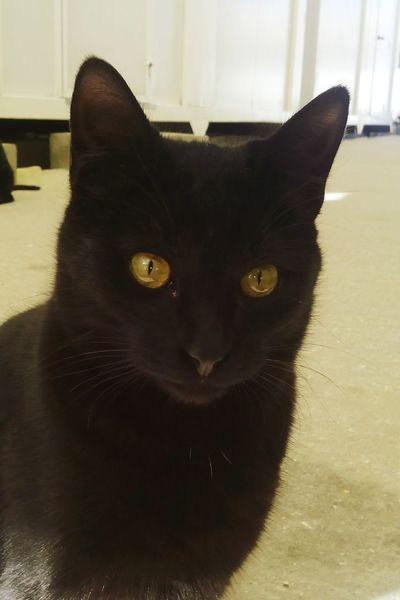 Marii BLackCat Cat